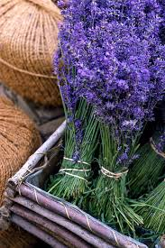 Most Fragrant Lavender Plant - 30 great lavender plant recipes and uses how to grow lavender