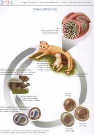 parasites and your pet internal parasites town centre