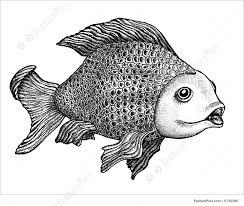 fish drawing illustration