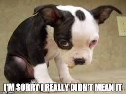 I Am Sorry Meme - image tagged in puppy sad imgflip