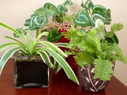 how to overwinter houseplants hgtv
