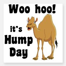 Hump Day Camel Meme - woo hoo it s hump day meme wishmeme