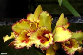 Dendrobium Orchid Dendrobium Orchids Hgtv