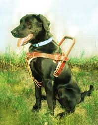 service dogs for america mobility assistance dogs