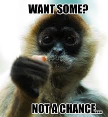 Meme Monkey - mean monkey memes lol