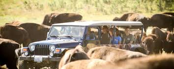 South Dakota wildlife tours images Buffalo safari jeep tours black hills badlands south dakota jpg