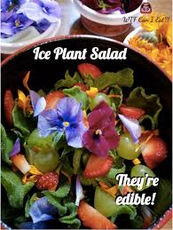 flowers edible plant salad with edible flowers can i eat