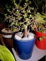 beautiful house plants ssu home beautiful indoor plants and pots for your home paperblog
