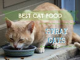 best cat food for strays fluffy kitty