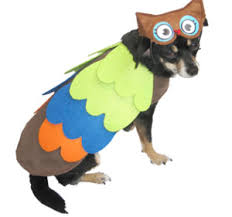 owl halloween costumes for dog family finds fun