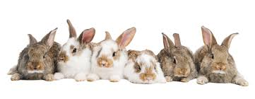 protection for pet rabbits berry house vets hitchin shefford