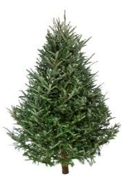 Christmas Tree Pick Up Holiday Recycling Guide Coon Rapids Mn Official Website