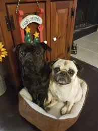 Two Peas In A Pod Meme - two peas in a pod dogs dog stuff dog memes dog treats dog