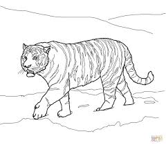 white tiger clipart traceable pencil and in color white tiger