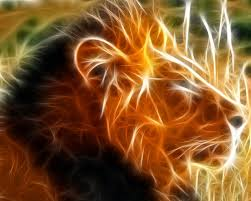 3d wallpapers animal group 79