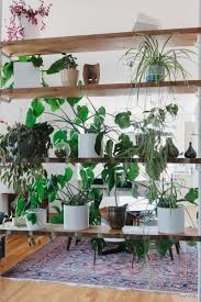 50 ways decorate with plants even if you have a small apartment