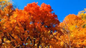 peak fall autumn colors colorful forest foliage landscape
