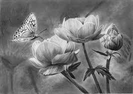 how to draw a butterfly on a flower lessons