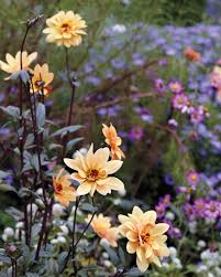 Peach Flowers Garden Palette Chartreuse Yellow Peach U0026 Pink Martha Stewart