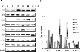 interleukin 13 inhibits lipopolysaccharide induced bpifa1