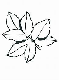leaves coloring pages printable coloring home