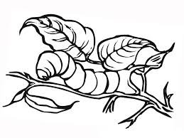 insect coloring pages coloringsuite com