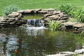How To Build A Fish Pond In Your Backyard Build The Ultimate Turtle Pond