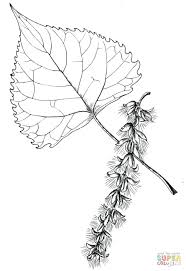 articles on coloring pages tree leaves coloring pages for kids