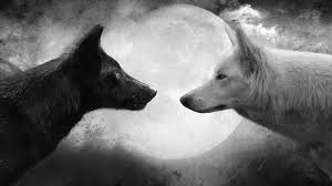white wolf two wolves legends