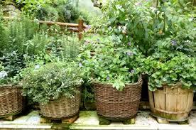 herb garden containers gardening ideas