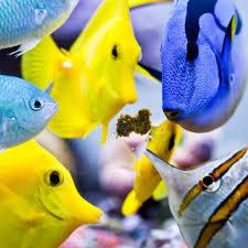 best black friday deals saltwater supplies saltwateraquarium com marine reef u0026 freshwater supplies