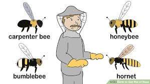 How To Get Rid Of Backyard Flies by How To Get Rid Of Bees 15 Steps With Pictures Wikihow