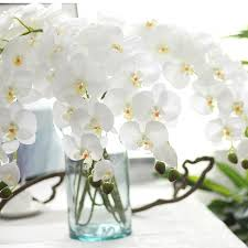silk orchids real touch silk orchids artificial phalaenopsis flower branch for