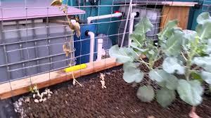 tour our aquaponics system backyard aquaponics north east