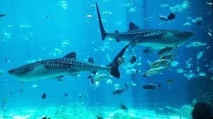 the georgia aquarium youtube