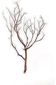 manzanita branches for sale koyal wholesale real manzanita branches 12 inch
