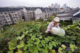 urban farmers in china 1 chinadaily com cn