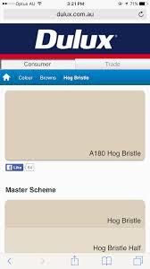 hog bristle dulux paint house painting pinterest dulux