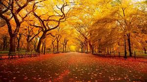copper colored tunnel of trees in the park