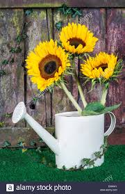 decorative watering can stock photos u0026 decorative watering can