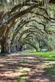 Mississippi natural attractions images Biloxi mississippi been there done that pinterest southern jpg