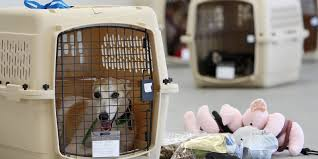black friday dog crate rated safest crates carriers for your pet