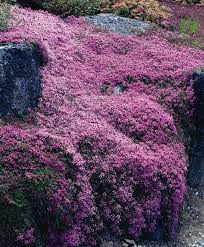 Flowering Shrubs That Like Full Sun - best 25 deer resistant landscaping ideas on pinterest deer