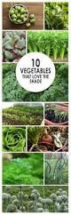 41 best home growing images on pinterest decks inside garden
