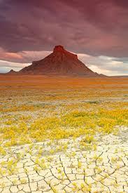 best 25 desert flowers ideas on pinterest cactus flower
