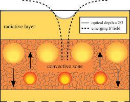 magnetic fields in stars open science