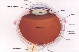 Blind Spot In Eyes Visual System