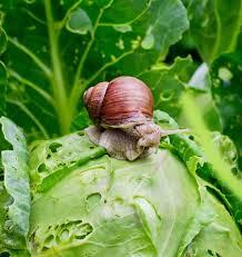 Types Of Garden Slugs And Slugs