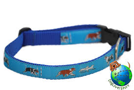 australian shepherd gifts australian shepherd collar nylon medium 11 19