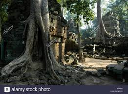 mystic temple in the jungle overgrown by big roots and trees ta